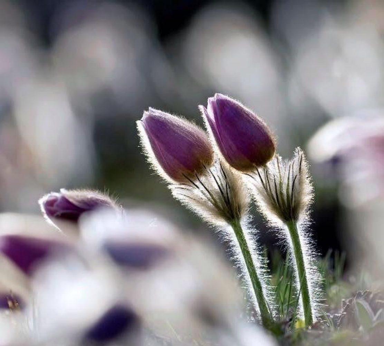 Camminata botanica alla scoperta dei segreti tintori delle piantealpine